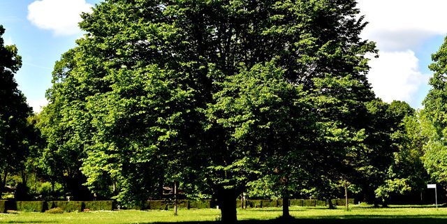 Park with trees