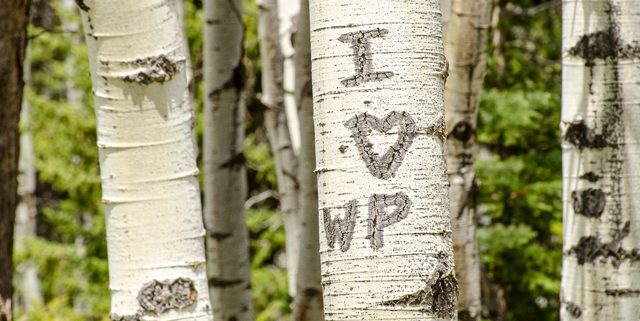 Initials carved in tree